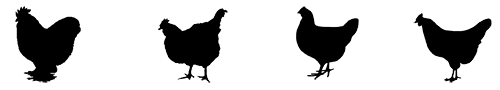 Carolina Coops - black CHICKENS-logo-500P