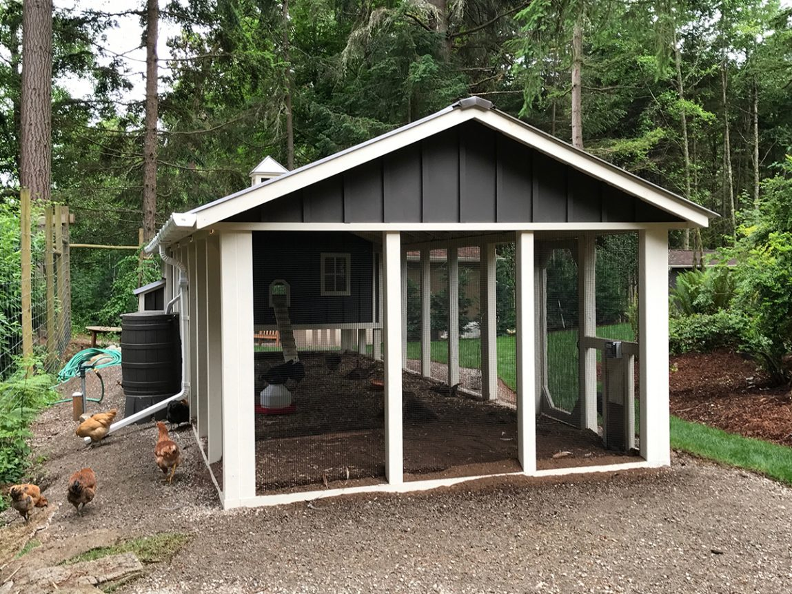 Carolina Coop with board and batten siding and rain barrel in Seattle, WA