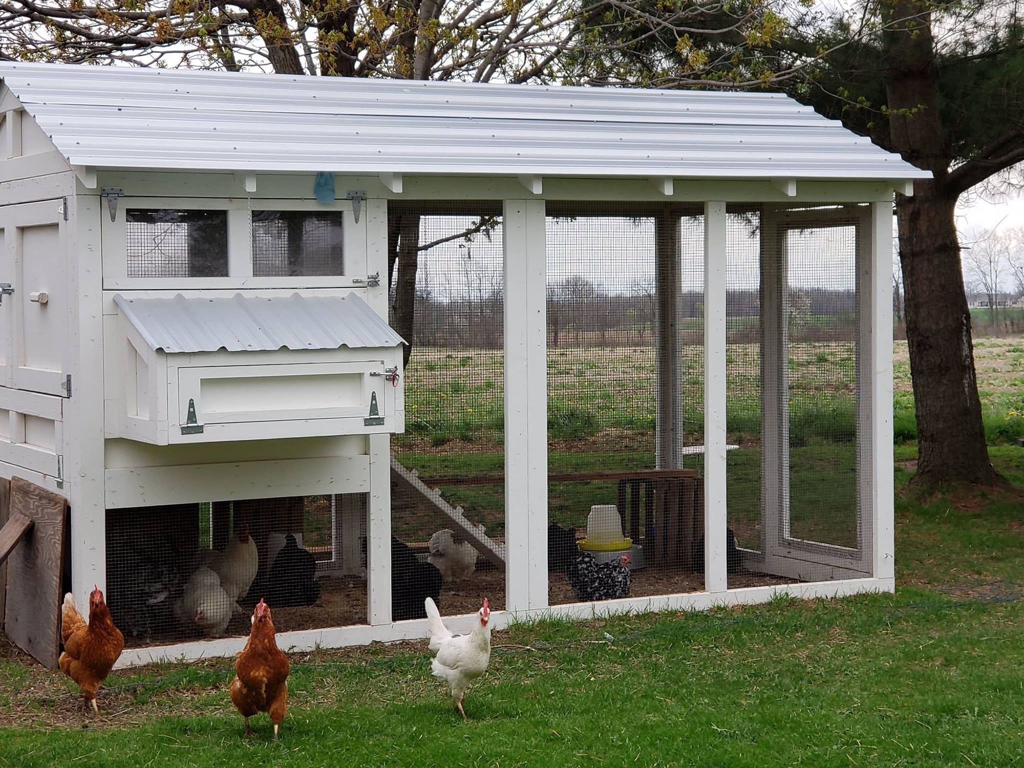 6′ x 12′ American Coop with 4'x 6′ henhouse in Shortsville, NY Gerlock Farms