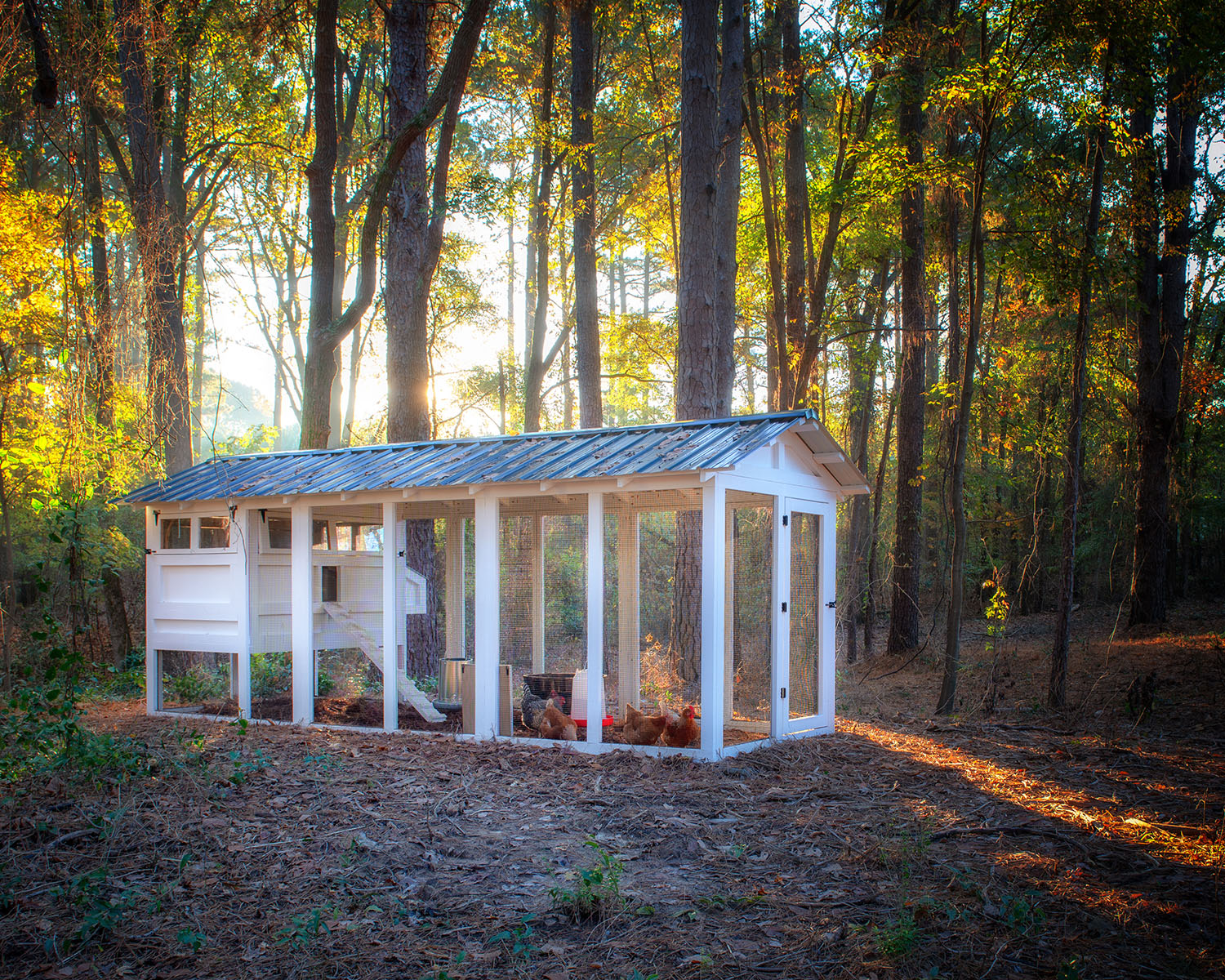 6′ x 18′ American Coop with 4'x 6′ henhouse  in Texas