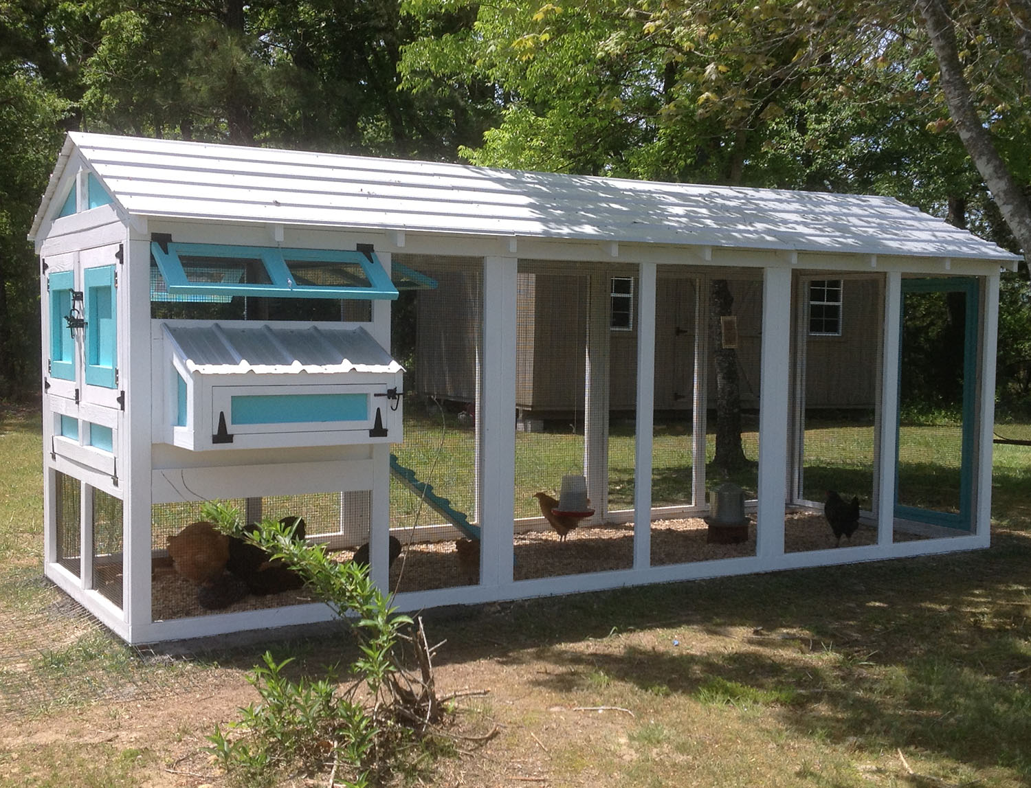 6′ x 18′ American Coop with 4′ x 6′ henhouse in blue and white