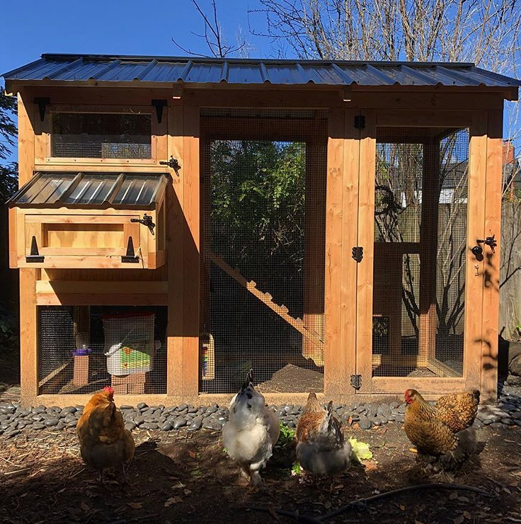 California Coop for a flock of four in California