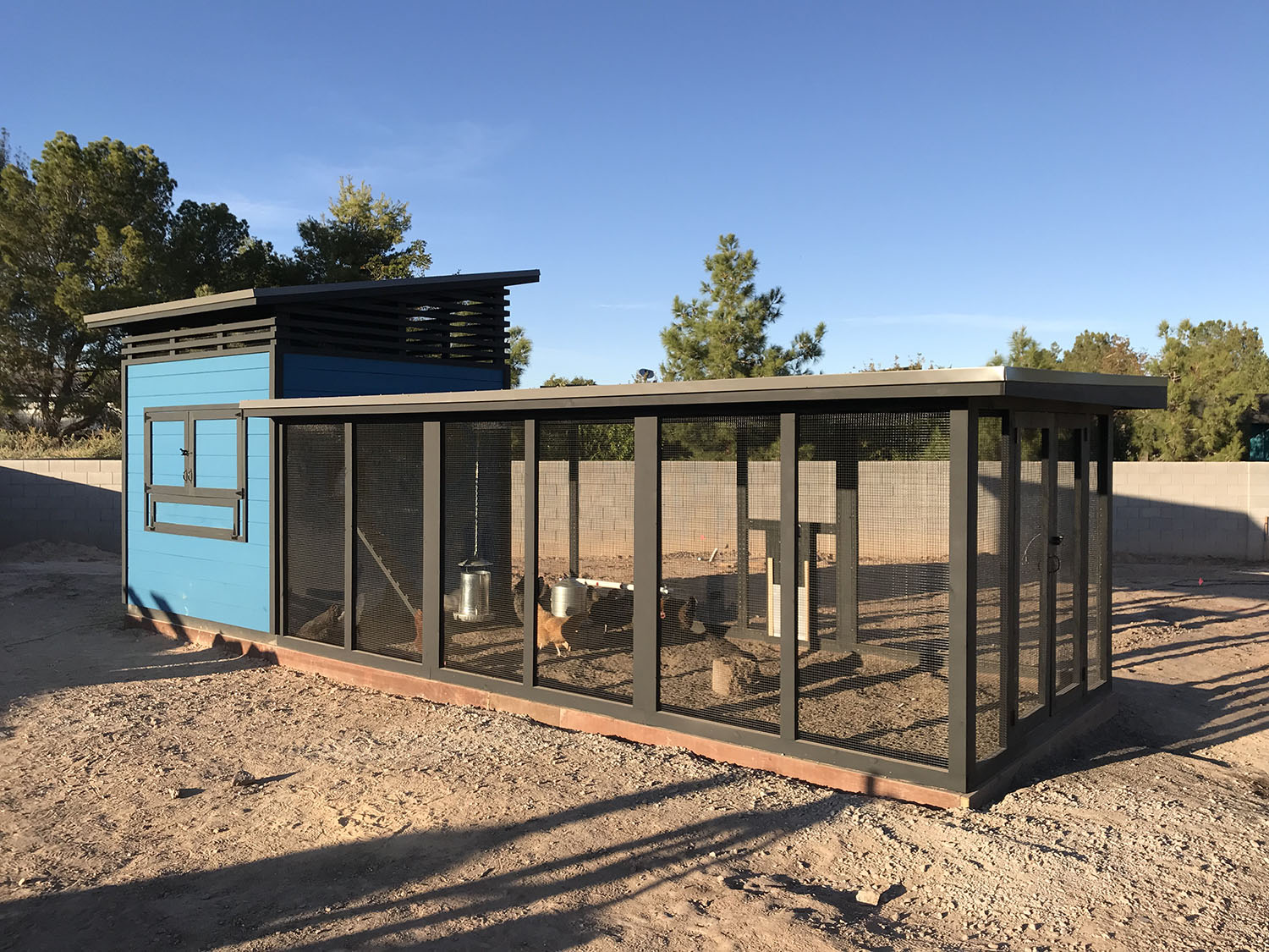 Modern coop with ship lap siding and shed style henhouse in Las Vegas, NV