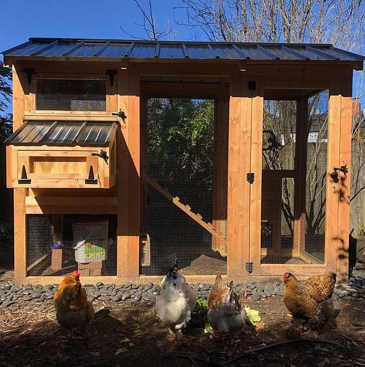 California Coop installed for a small flock of four in California