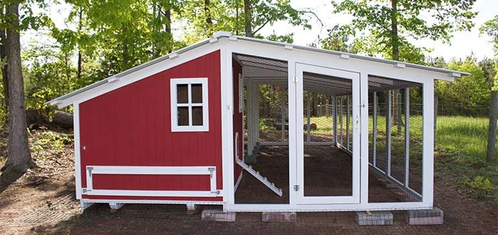 Carolina Coops large custom shed style coop