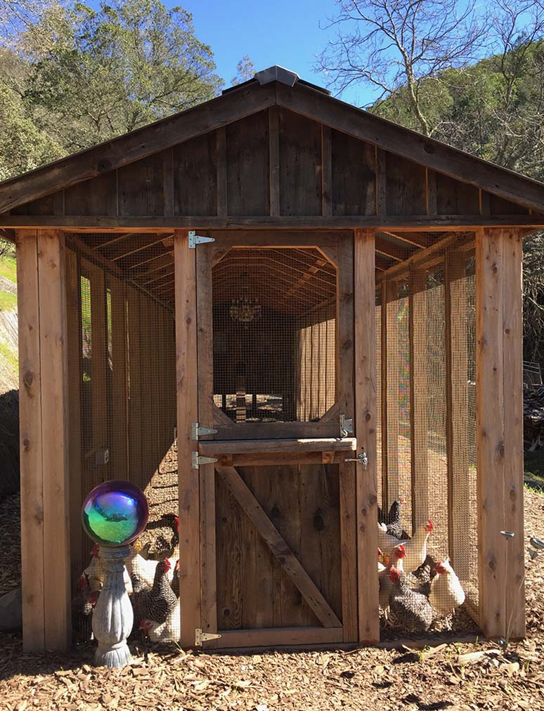 Custom red cedar and reclaimed barnwood coop with Dutch door in Calistoga, CA