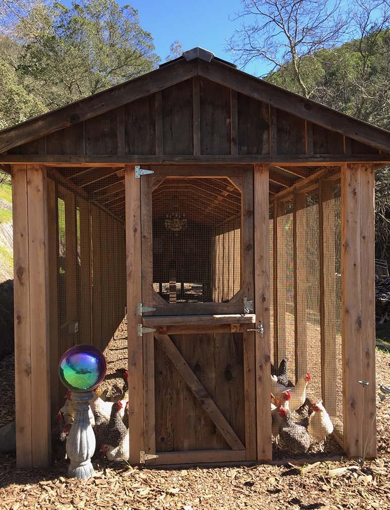 Custom red cedar and reclaimed barnwood coop with Dutch door in Calistoga, CA