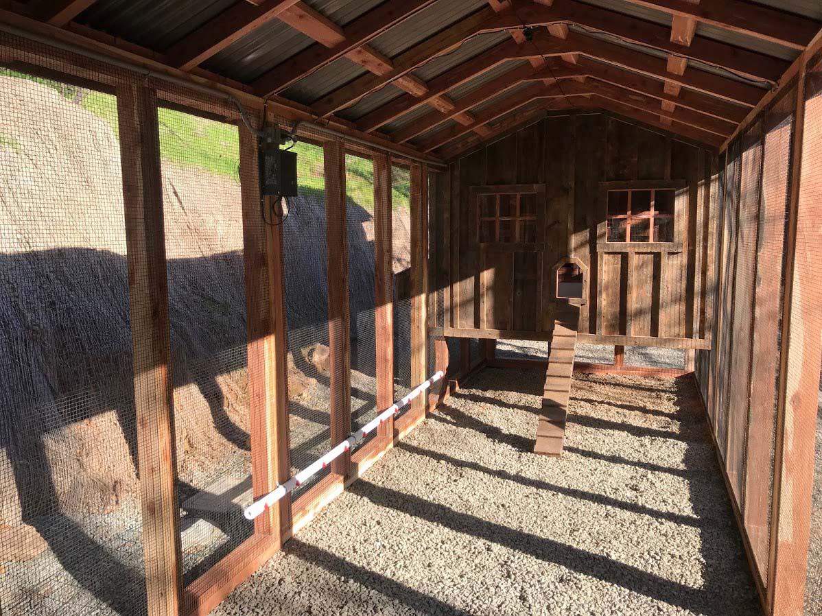Inside the run of the custom red cedar and reclaimed barnwood coop in Calistoga, CA