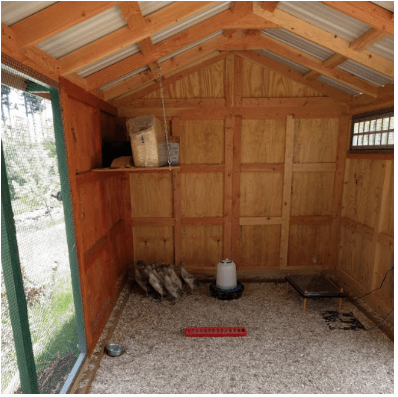Interior of custom duck coop in Freeland, WA