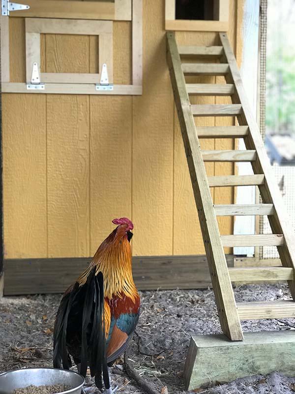 Custom Chicken Run in Orlando, Florida