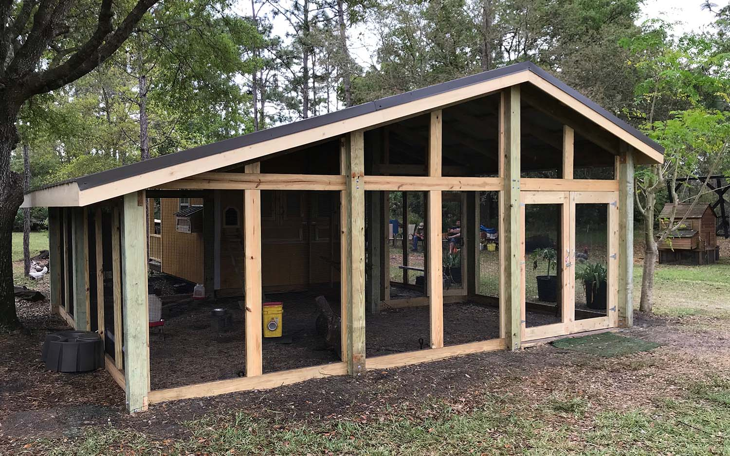 Large custom chicken run built onto converted shed in Orlando, Florida