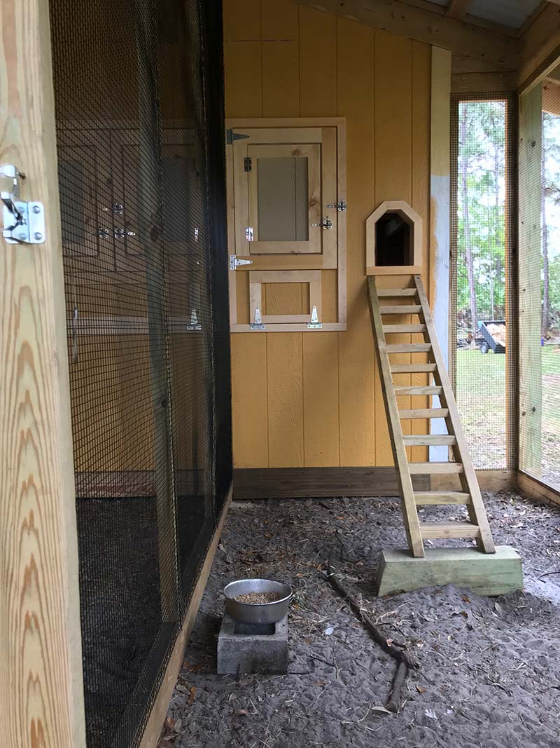 Separate rooster house in custom chicken run in Orlando, Florida