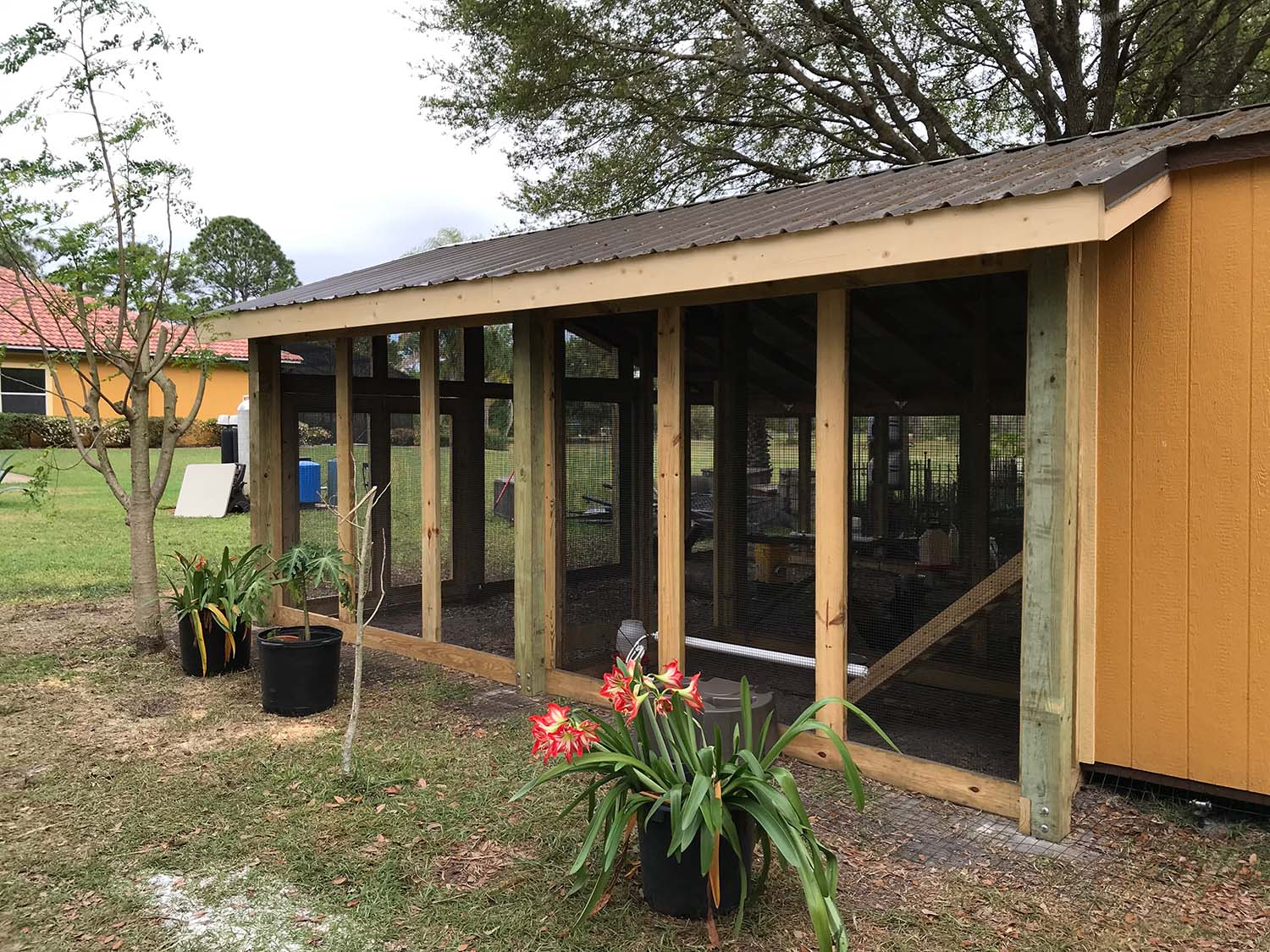 Side view of custom chicken run built on converted shed in Orlando, Florida