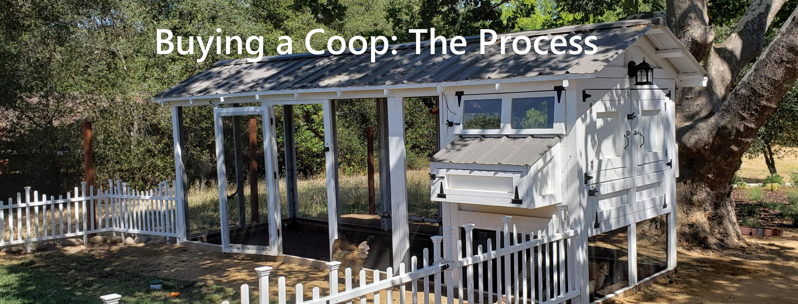 Buying a chicken coop: the process