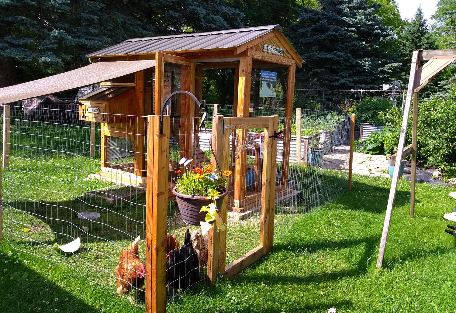 Chickens enjoying their 4'x9′ California Coop in West Bend, WI