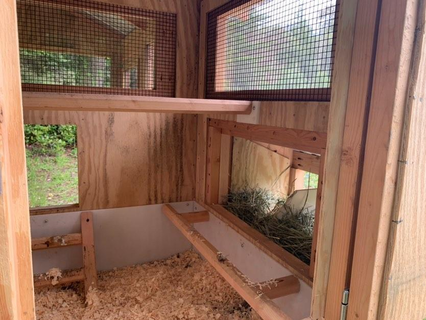 Inside the 4'x3′ henhouse on egg hutch side of a 4'x9′ California Coop