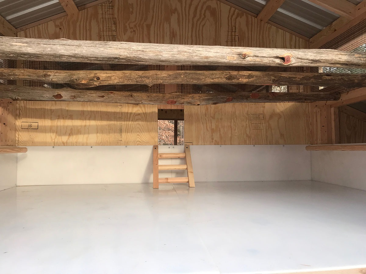 Inside the 6'x8′ henhouse of an 8'x24′ American Coop with natural tree branch roost bars