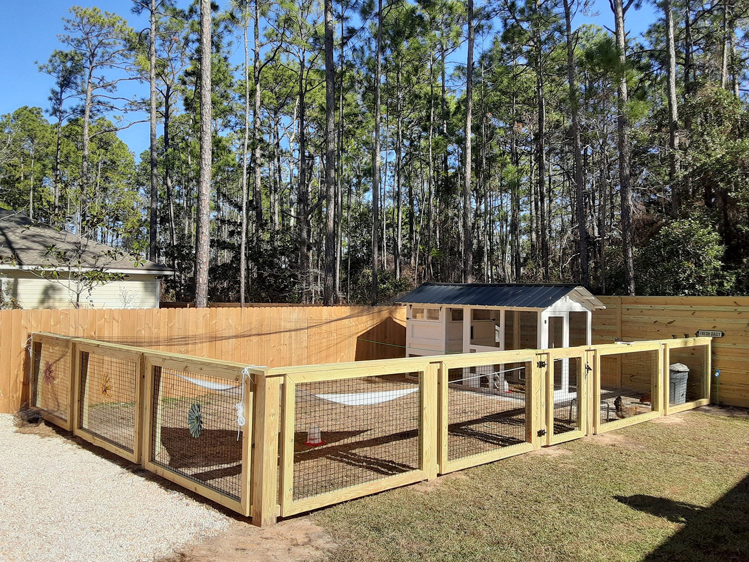 6×12 American Coop in Florida with fencing around