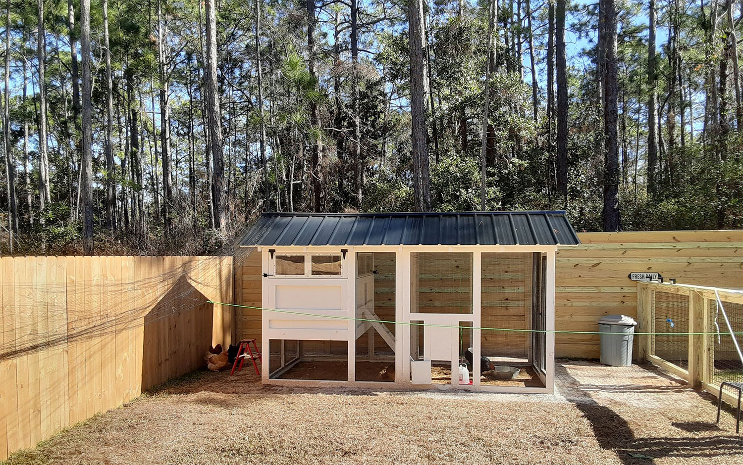 6×12 American Coop in Miami, Florida with fenced in area with netting