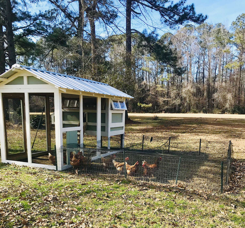 6'x12′ American Coop painted by customer with chicken run door