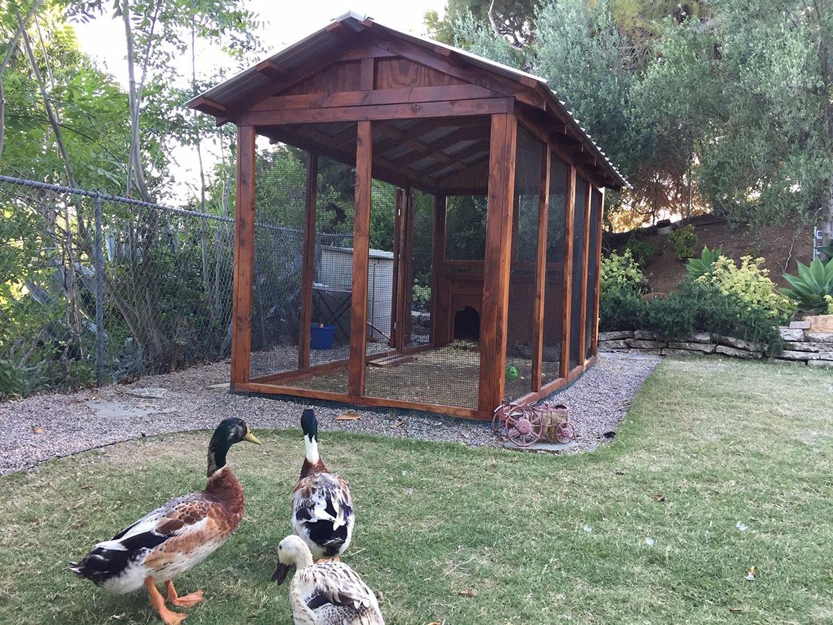 6×12 American Duck Coop in California