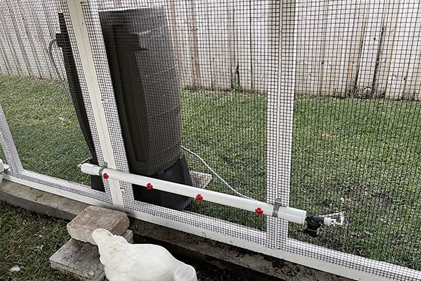 Chicken coop accessories - gravity fed poultry water system