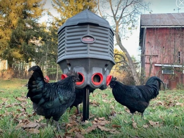 CoopWorx 40 lb feed silo II with chickens