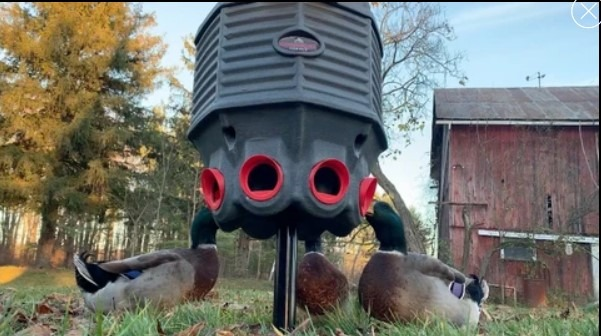 CoopWorx 40 lb feed silo II with ducks